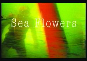 Sea Flowers1
